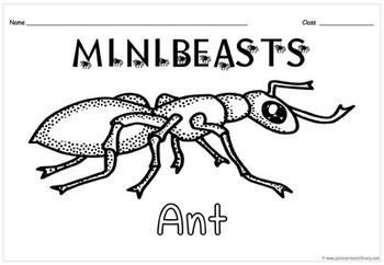 26 Minibeasts Bugs Insects Colour In Sheets On A4 PDF