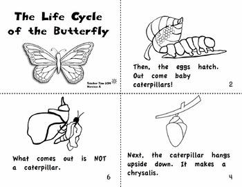 Apples Book Science Books K 1st 2nd | Butterfly Life Cycle Book