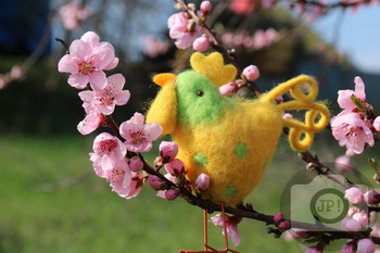 274 - EASTER [By Just Photos!]