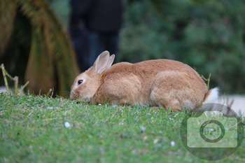 282 - ANIMAL - RABBIT [By Just Photos!]