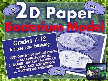 Bacteria 2D Paper Model (Foldable)