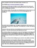 2RI.6 Author's Purpose Sea Turtles