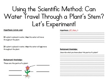 Simple Science Experiment: Can Water Travel Through a Plant's Stem? (Grades 1-4)