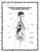 2nd Grade Health - Unit 2: Growth and Development