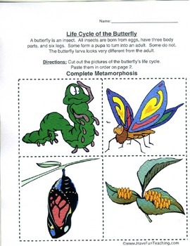 2nd Grade Life Cycle of a Butterfly Lesson