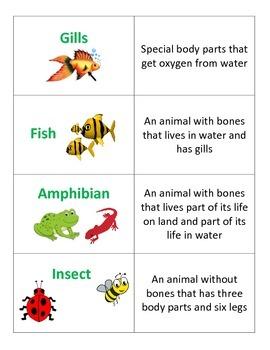 2nd Grade Life Science Vocab Flash Cards