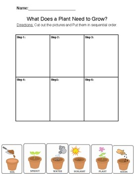 2nd Grade Plants Science Worksheet by Antoinette Chow | TpT