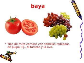 3-5th Grade Spanish Vocabulary - Week 4