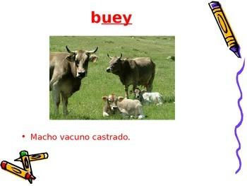 3-5th Grade Spanish Vocabulary - Week 7