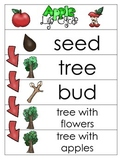 3 Apple Life Cycle Charts and Worksheets. Preschool-1st Gr