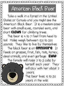 3 Bear Compare