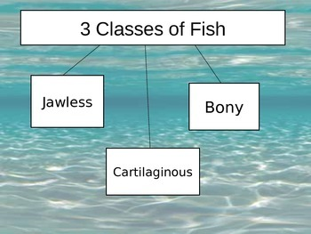 3 Classes of Fish Power Point