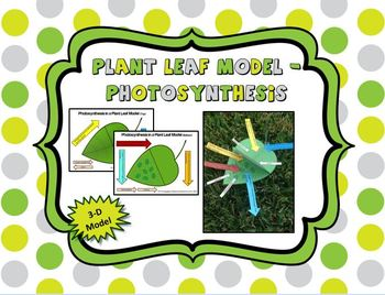 Photosynthesis 3-D Leaf Model (Color and B&W)