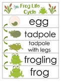 3 Frog Life Cycle Charts and Worksheets. Preschool-1st Gra