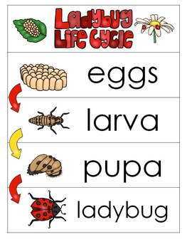 3 Ladybug Life Cycle Charts and Worksheets. Preschool-1st Grade. Homeschool.
