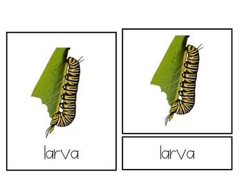 3 Part Cards - Butterfly Life Cycle - Ciclo de vida - Bilingual Montessori