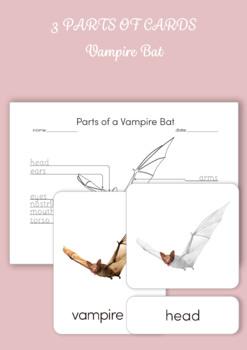 3 Part Cards - Parts of a Bat