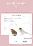 3 Part Cards - Parts of a Bird