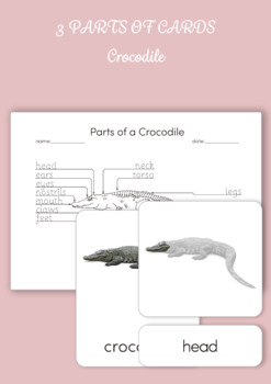 3 Part Cards - Parts of a Crocodile