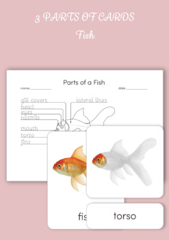 3 Part Cards - Parts of a Fish