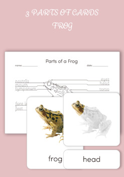 3 Part Cards - Parts of a Frog
