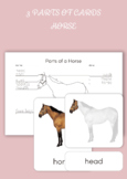 3 Part Cards - Parts of a Horse