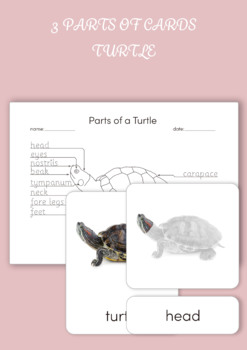 3 Part Cards - Parts of a Turtle