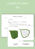 3 Part Cards - Parts of a leaf