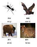 3 Part Cards for Animals in Chinese