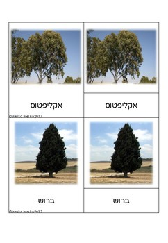 3-Part Cards of trees  in Israel Montessori --- Hebrew