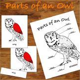 Parts of an Owl - 3 Part Montessori Nomenclature Cards