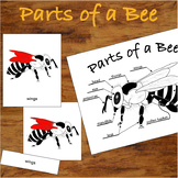 3 Part Nomenclature Cards - Parts of a Bee