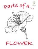 3 Part Nomenclature Cards - Parts of a Flower