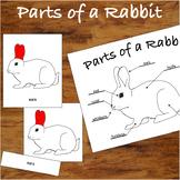 3 Part Nomenclature Cards - Parts of a Rabbit