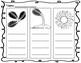 3 Step Sunflower Writing - English