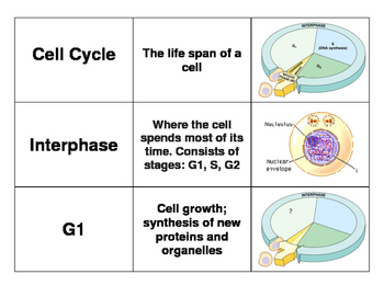 3 Way Match - Cell Cycle