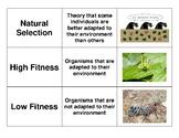 3 Way Match - Natural Selection