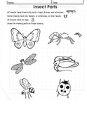 Insect worksheet-Free