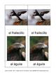 3 part cards MONTESSORI in SPANISH: AVES (Birds)
