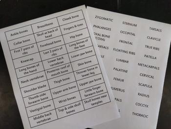 30 Bone Names FLASH CARDS ~ SKELETAL SYSTEM~  Flash Card War Game