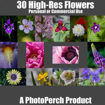 30 High Resolution Flower Stock Photos
