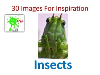 30 Photographs for Inspiration - Insects