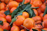 315 - CLEMENTINES [By Just Photos!]