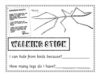 34 Page US Bugs Insects Minibeasts Student Fact & Work Book US Letter Size PDF