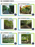 360 Degree Virtual Environment - Forests