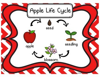 3D APPLE LIFE CYCLE CRAFTIVITY & APPLE LIFE CYCLE POSTER, ANCHOR CHART ELEMENTS
