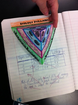 3D Ecology Energy Pyramid for Notebooks