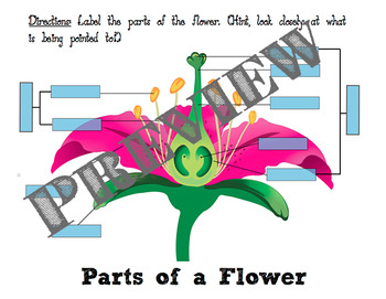 3D Flower Engineering Design STEM Challenge