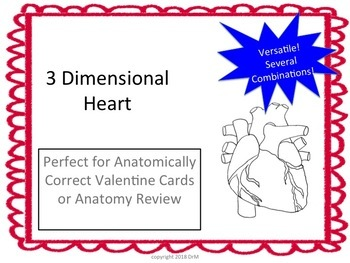 3D Heart Activity W/Teacher's Guide-Bundle W/Anatomically Correct HeartValentine
