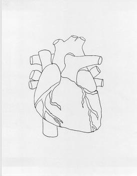 3D Heart Larger 1pg Size! Easier to Label! W/Teacher's Key